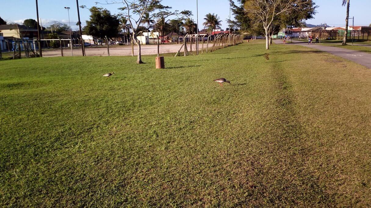 Foto de um campo de grama feita com o Vernee Thor